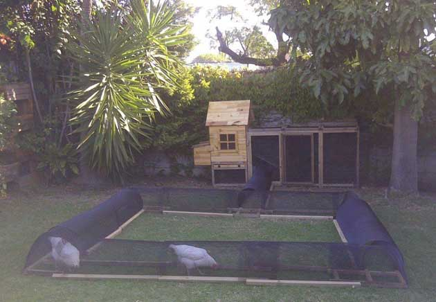 Build A Diy Chicken Tunnel In Your Backyard