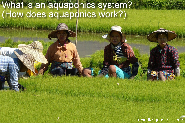 What is an aquaponics system - How does aquaponics work