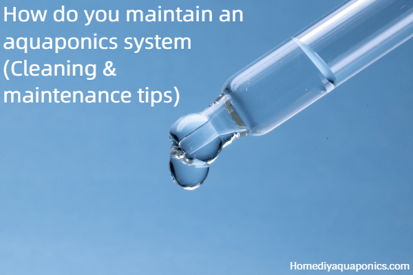 How do you maintain an aquaponics system - Cleaning maintenance tips