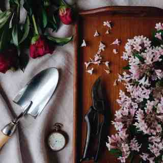 garden gifts including garden trowel and pruning shears with pink peonies and beauty bush blooms