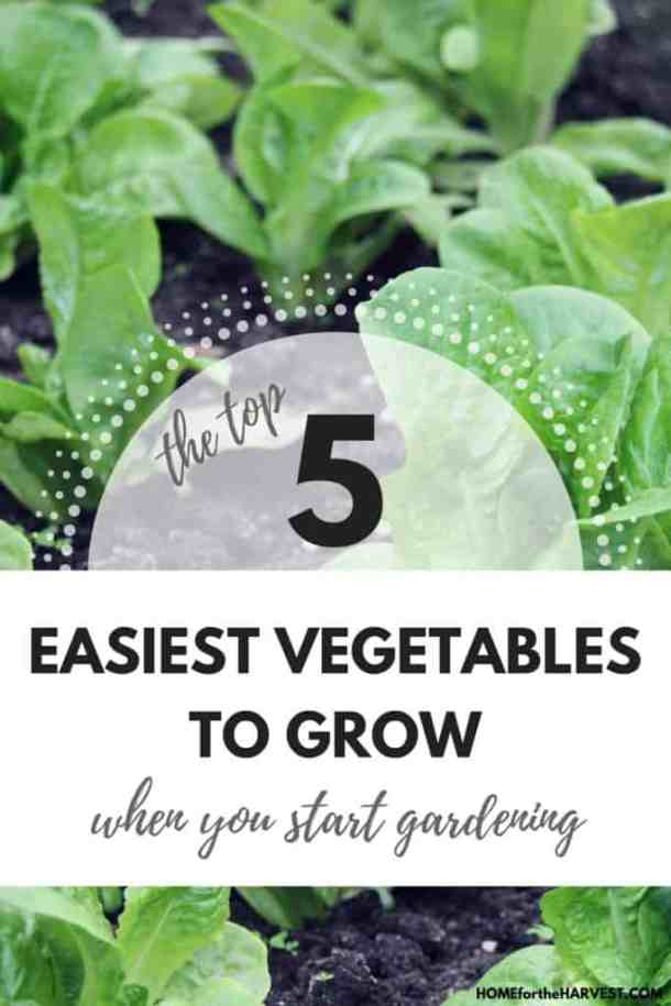 The Top 5 Easiest Vegetables to Grow When You Start Gardening | Home for the Harvest