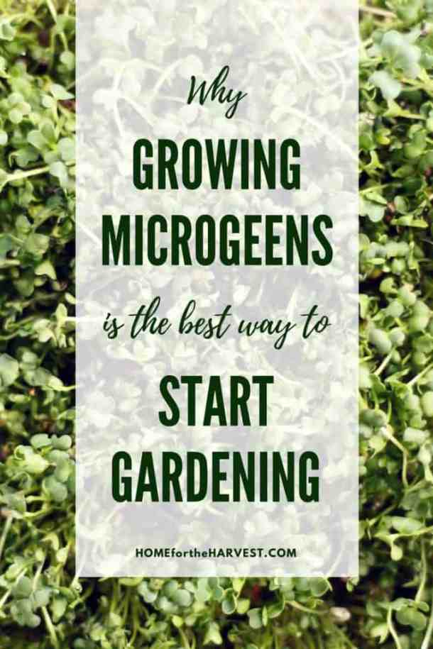 Why Growing Microgreens is the Best Way to Start Gardening | Home for the Harvest