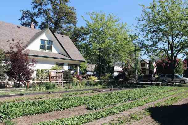 Urban Farm | Home for the Harvest Gardening Blog