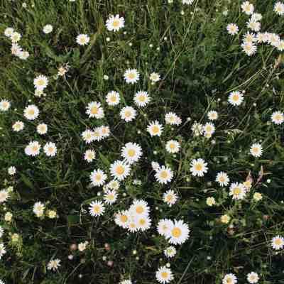 5 Reasons Your Garden Isn't Organic