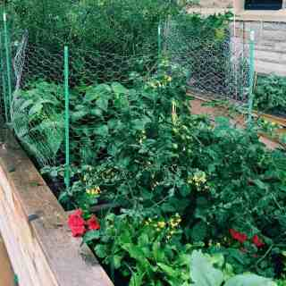 Joining a Community Garden | Home for the Harvest