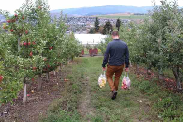 Apple Picking at Davison Orchards | Home for the Harvest