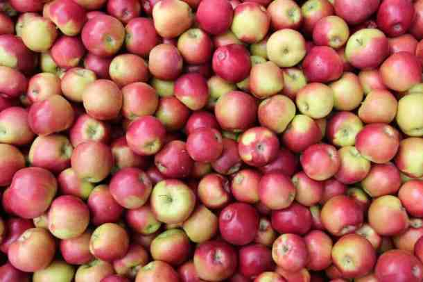 Growing Organic Apples | Home for the Harvest