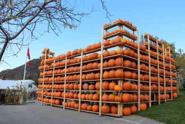 Okanagan Pumpkin Patch Pumpkin Castle   Home for the Harvest