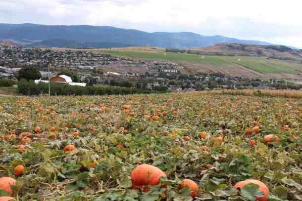 Davison Orchards Pumpkin Patch   Home for the Harvest