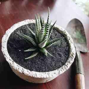 succulent terrarium garden bowl on wooden table with garden trowel