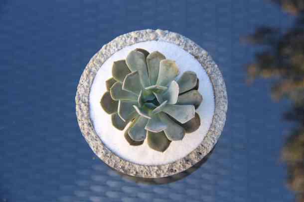 planted succulent terrarium garden bowl on glass patio table