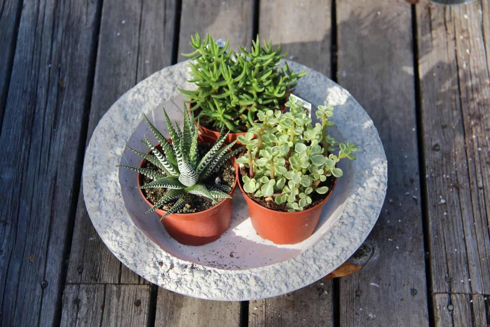 Succulent bowl how to make a succulent terrarium home Planters for succulents