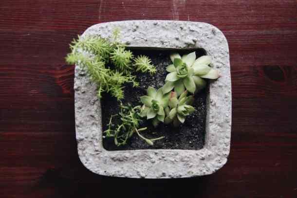 square concrete modern succulent terrarium garden on wooden table
