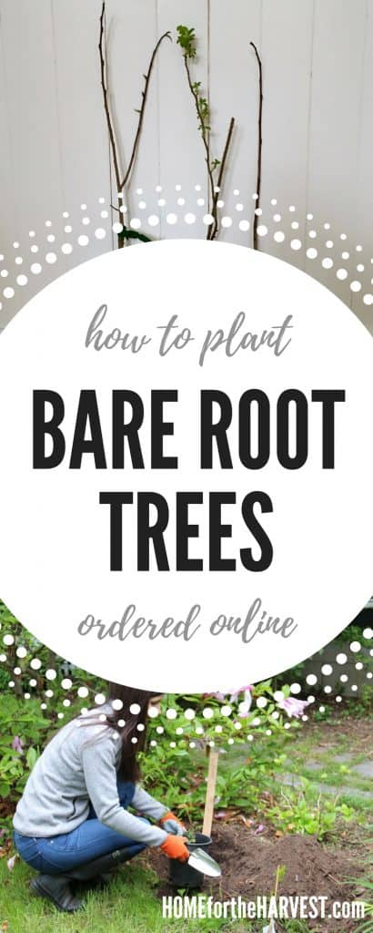 How to Plant Bare Root Trees - Tutorial and Printable Instructions | Home for the Harvest