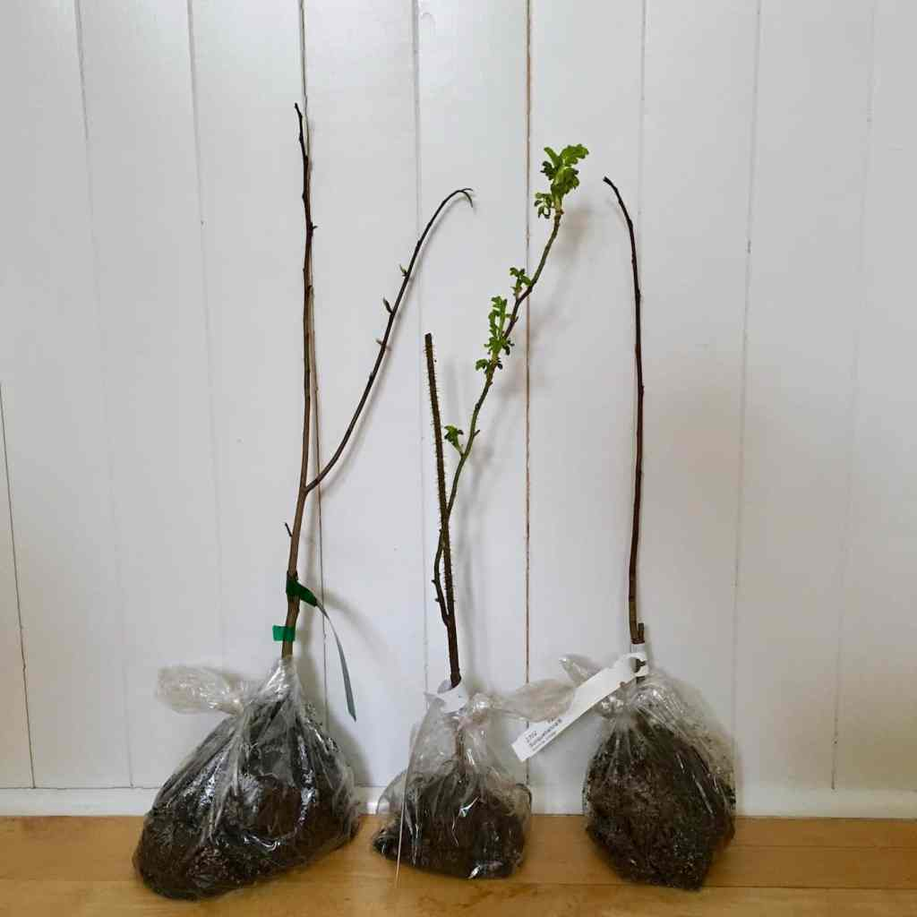 Bare Root Trees: What It's Like To Order Trees Online
