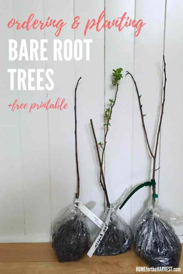 Ordering and Planting Bare Root Trees - Tutorial and Printable Instructions | Home for the Harvest
