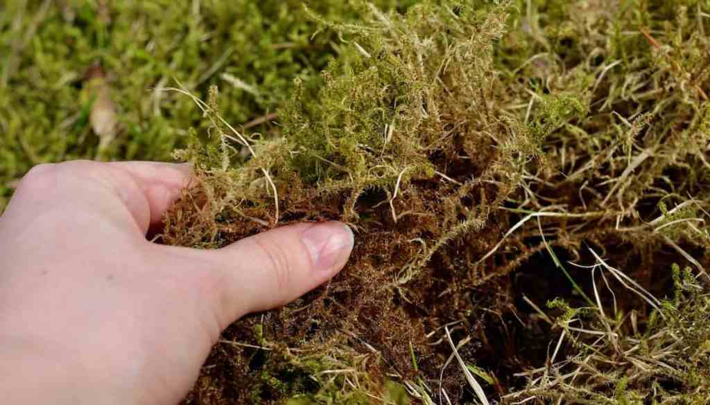 How to Collect Moss | Home for the Harvest