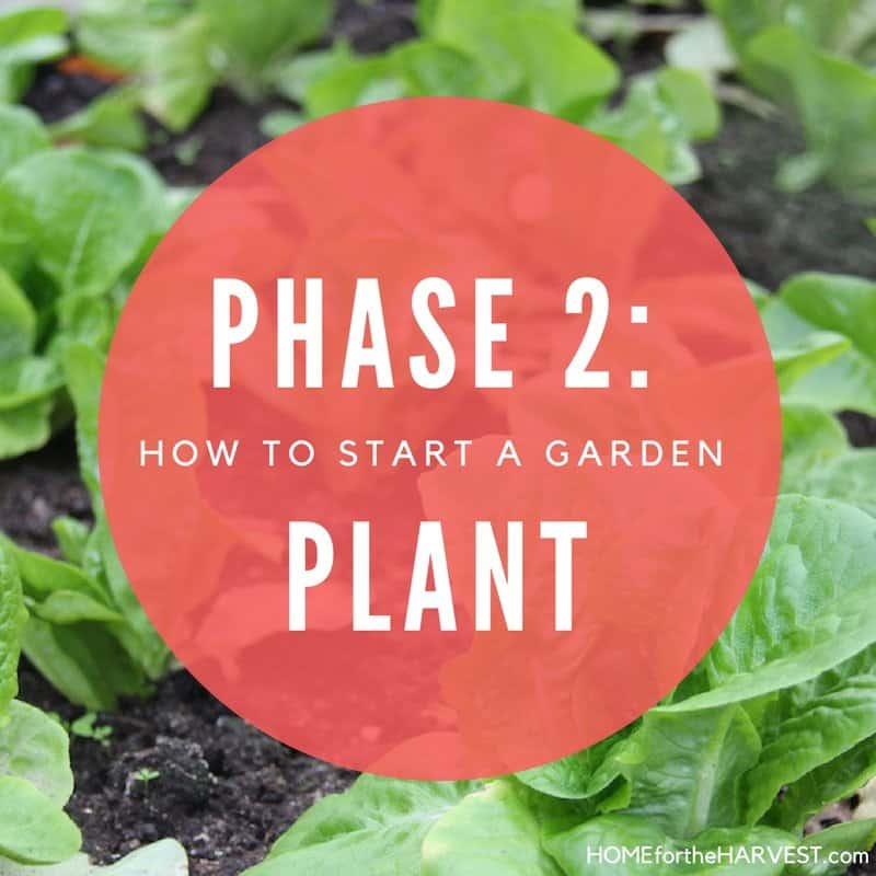 Phase 2: Plant the Garden - How to Start a Garden | Home for the Harvest