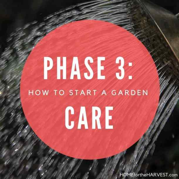 Phase 3: Care for the Garden - How to Start a Garden   Home for the Harvest
