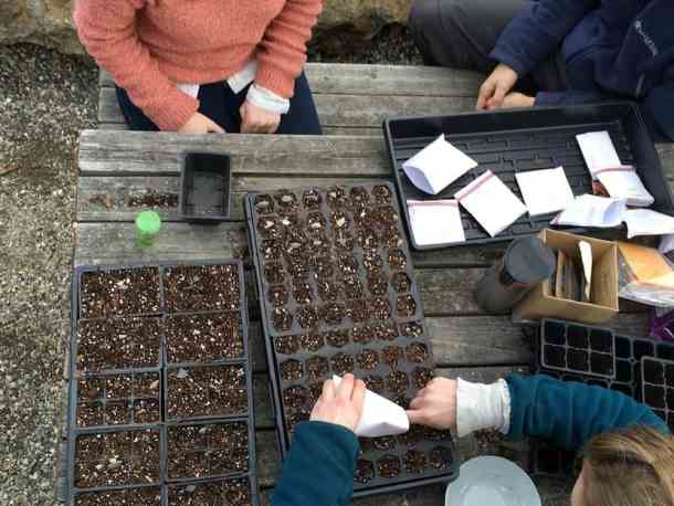 planting different types of seeds