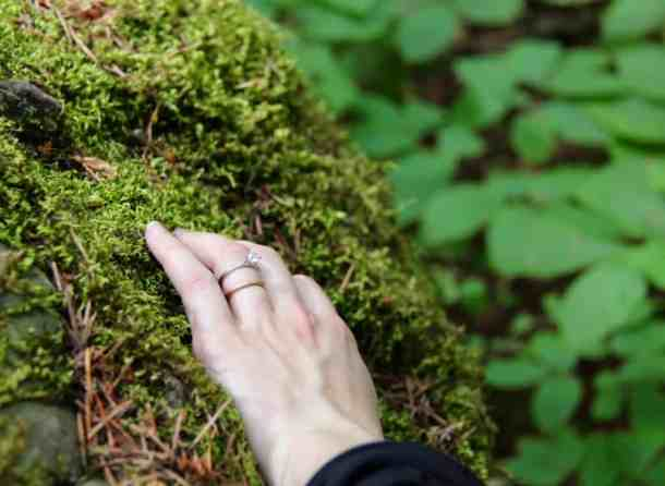 Where to Find Moss | Home for the Harvest
