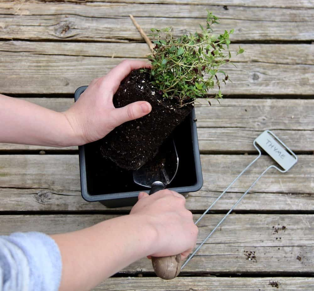 Garden And Home Pictures how to plant an organic container herb garden