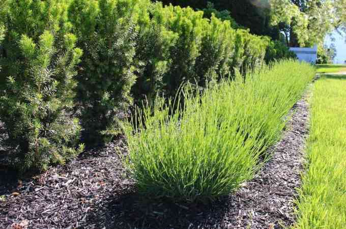 3 Easy Organic Mulch Options for a Thriving Garden | Home for the Harvest
