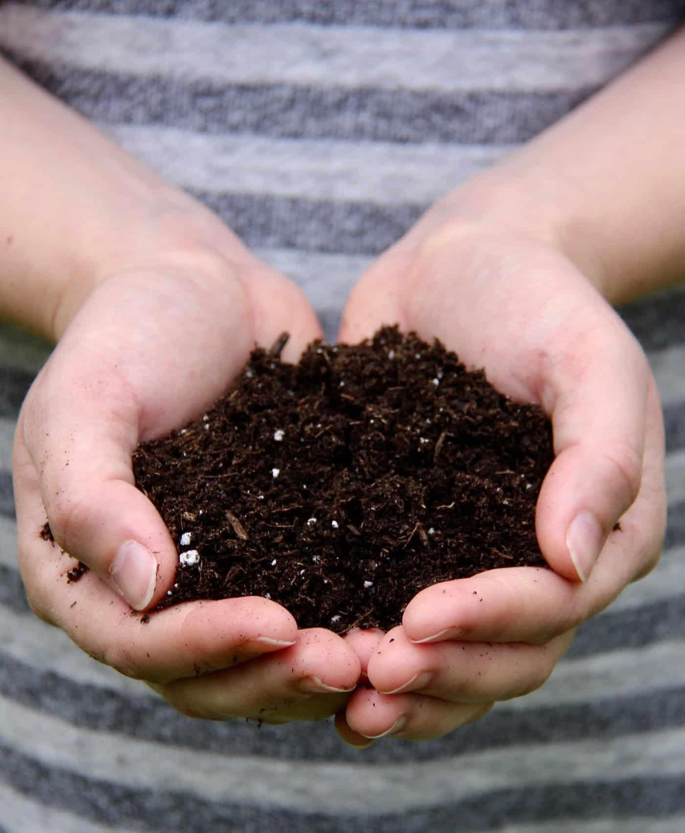 This Pro-Mix Review explains why more organic gardeners are willing to pay a bit more for the best organic potting soil #promix #organicpottingsoil #pottingsoil #organicpottingmix
