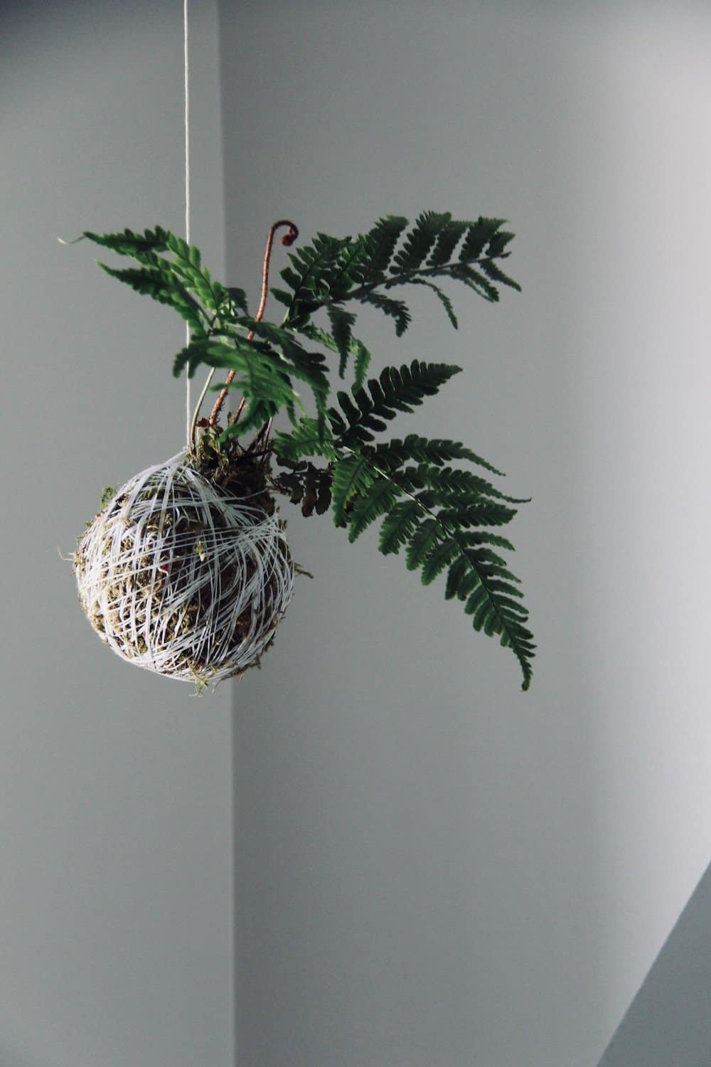 SO making this fern kokedama this weekend! I love hanging string gardens and this is perfect for my ensuite bathroom #houseplants #stringgardens #kokedama #bathroomplants