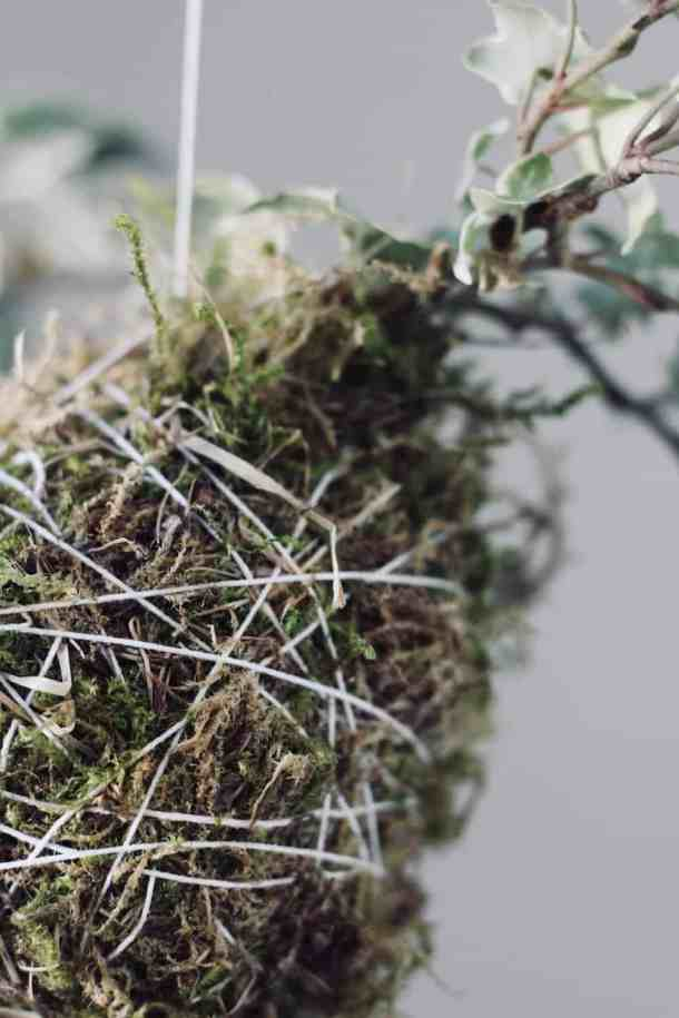 You might want to find some moss to make this gorgeous hanging plant! This kokedama moss ball is an easy way to bring greenery into your home year-round. #kokedama #mossball #kokedamamossball #stringgarden #moss