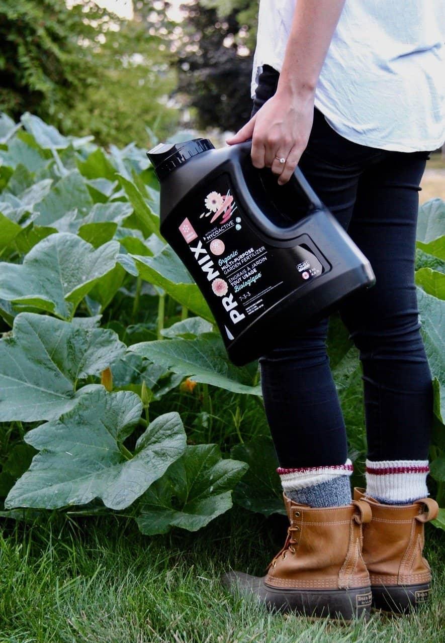 gardener holding general purpose organic fertilizer with large green pumpkin vine in background