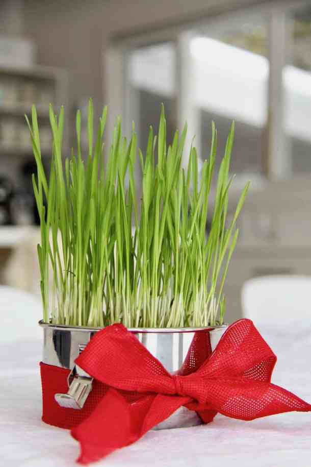 """Love Grows"" Green Valentine – How to Make a DIY Valentine's Gift"