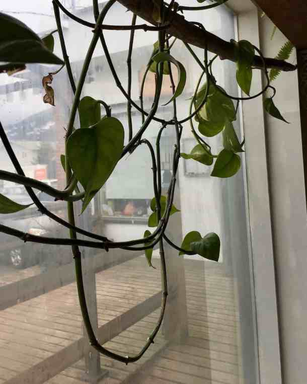 hanging plants on a window plant rod