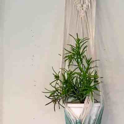 10 Hanging Plants and Ideas for Hanging Planters You'll Love