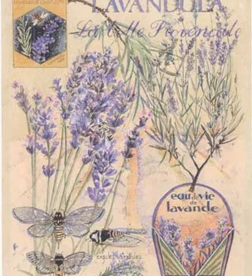 Do You Like Lavender?