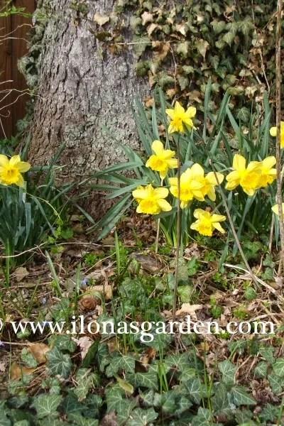 Spring Fever Struck