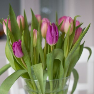 Love flowers? Discover how flowers influence a range of design ideas and concepts in the home and beyond