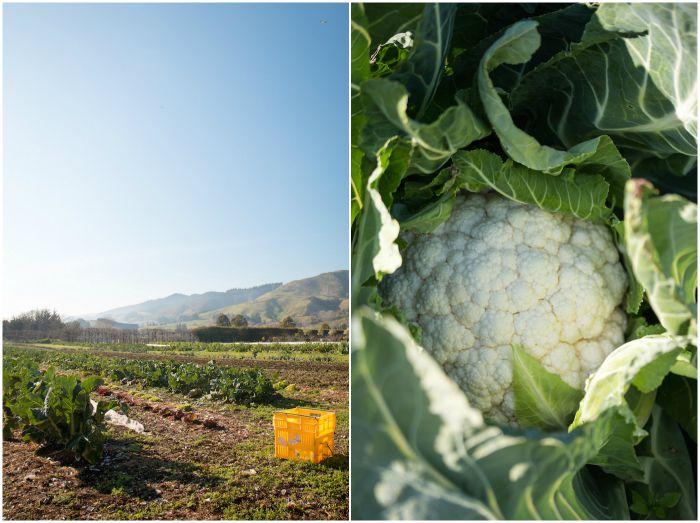 Cauliflower & Thyme Crumble | HOMEGROWN KITCHEN