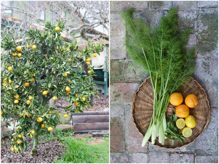Orange Fennel & Mint Slaw | HOMEGROWN KITCHEN