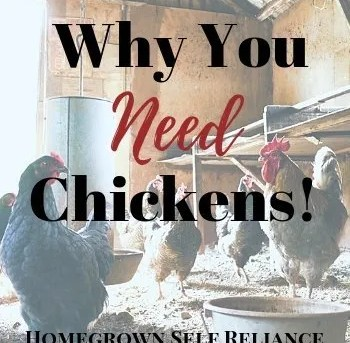 Why you NEED chickens!