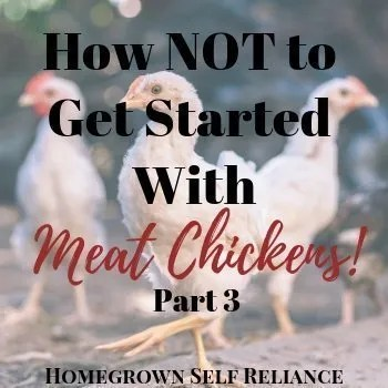 Chicks - How NOT to get started with meat chickens