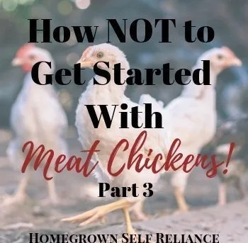 How NOT to get started with meat chickens (pt. 3)!