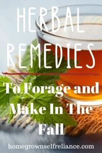 Herbal tea - Herbal Remedies to forage and make in the fall