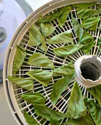 How to dehydrate basil- Home in the Finger Lakes