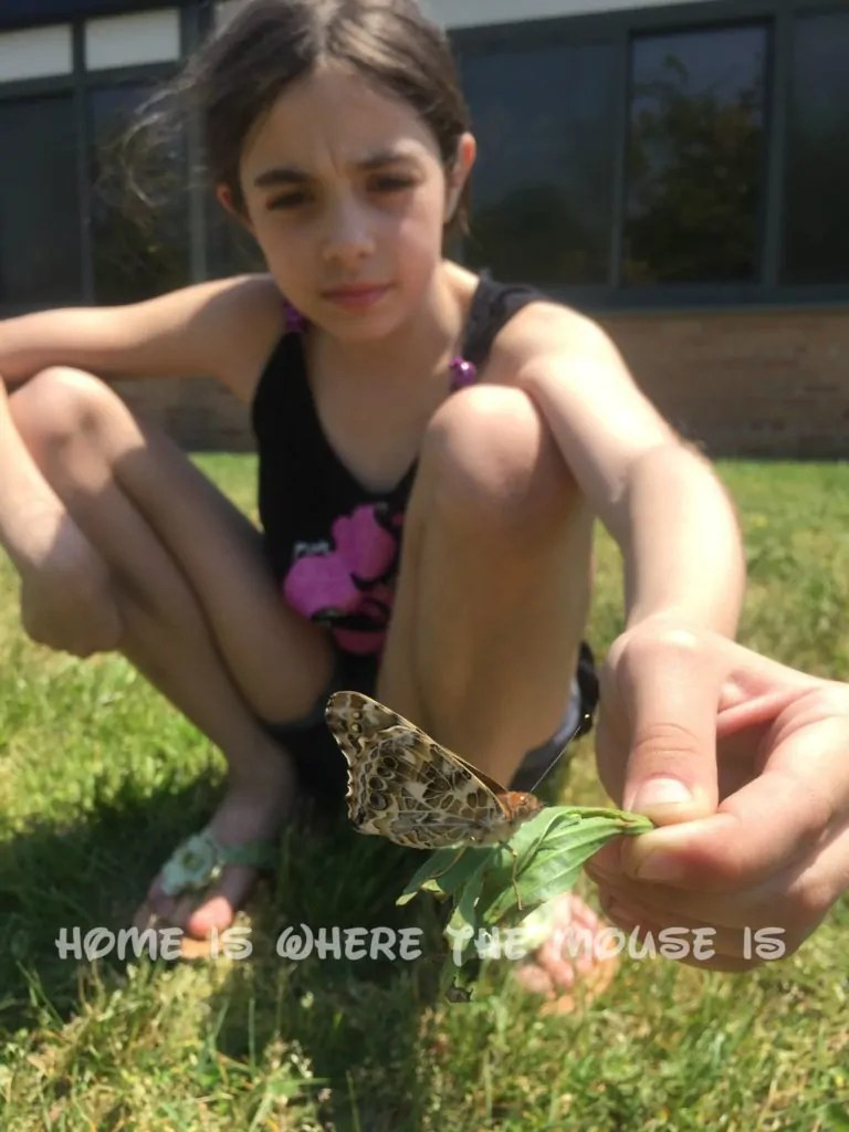 Bella releases her newly emerged butterfly