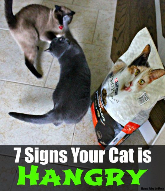 7 Signs Your Cat is Hangry