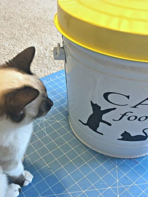 polly-and-cat-food-storage