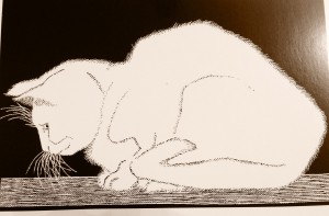 Signs Your Cat is in Pain