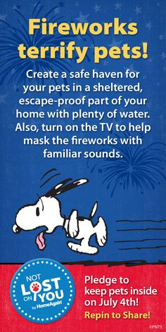 Tips For Keeping Your Cat Safe On July 4th