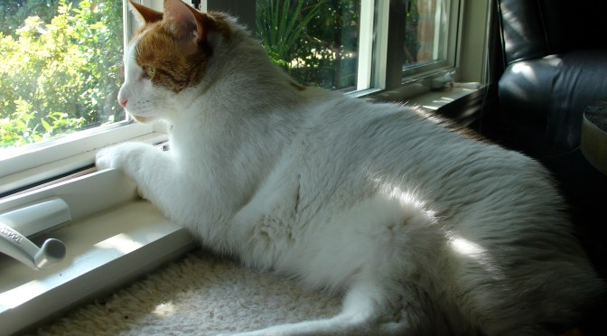 How to Create a Happier, Stress-Free Environment For Your Cat